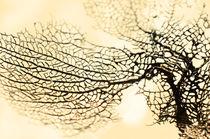 Coral Nature Design by Sylvia Seibl