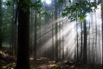 Nach einem kräftigen Sommerregen im Wald von Ronald Nickel