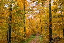 Auch im goldenen Herbst kann Nieselregen einsetzen von Ronald Nickel