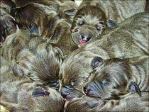 Puppies Sleeping Well  von Sandra  Vollmann