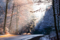 Winter sunlight on forest road by Thomas Matzl