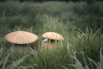 Straw Hats by David Halperin