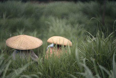 C-259-dot-31-e-straw-hats