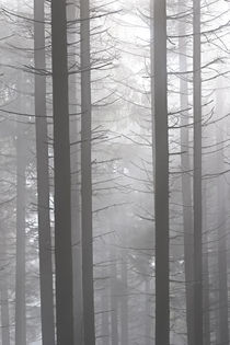 Nebel im Wald by Bernhard Kaiser
