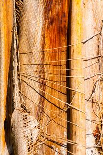 Detail of Palm Tree von maxal-tamor