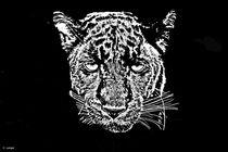 Panther by cordula langer