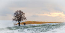 Winterlicher Ausritt von Thomas Matzl