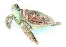 Schildkröte von Nadine Conrad