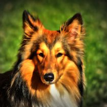 Collie Portrait 2 by kattobello