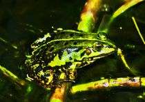 Green Frog in the sun light von kattobello