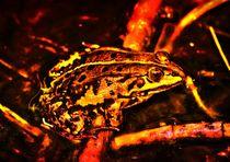 Feuer Frosch von kattobello