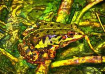 Teichfrosch von kattobello