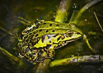 Grüner Frosch  by kattobello
