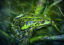 Grüner Frosch unter Wasser von kattobello