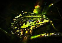 Mid Night Frog von kattobello