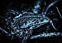 Frosch in der Nacht von kattobello