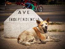 Independencia von Jens Schneider