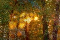 Autumn Light Symphony by maxal-tamor