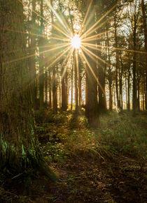 Sun Burst by Colin Metcalf