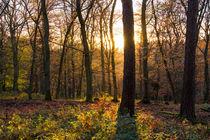 Sonnenuntergang im Wald von Ronald Nickel