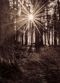 Sun Burst by Colin Metcalf