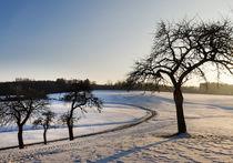 Obstbaum im Winter von Thomas Matzl