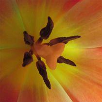 Tulpenseele von Angelika  Schütgens