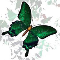 Butterfly 317 von David Dehner
