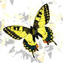 Butterfly 326 von David Dehner