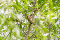 Sparrow on a Branch by maxal-tamor