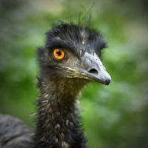 Emu Portrait 3 von kattobello