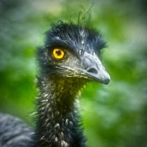 Emu Portrait 2 by kattobello