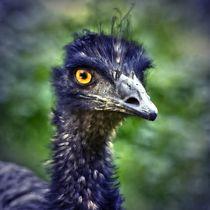 Blue Emu von kattobello