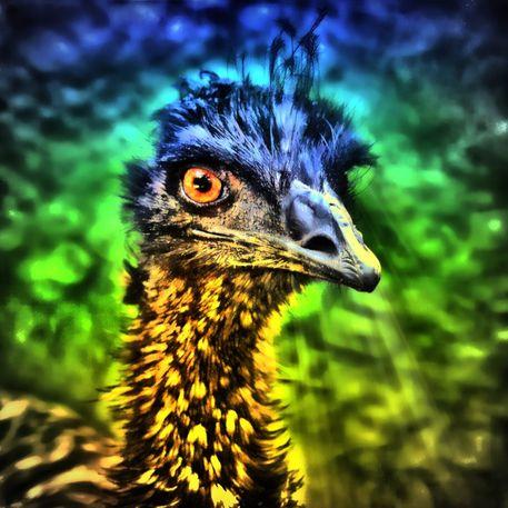 Emu-blick-34
