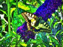 Farbenfroher Schwalbenschanz auf Flieder 3 von kattobello