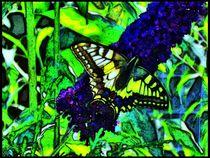 Farbenfroher Schwalbenschanz auf Flieder 2 von kattobello