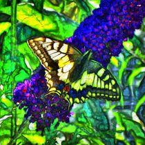 Farbenfroher Schwalbenschanz auf Flieder 1 by kattobello
