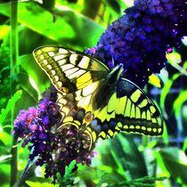 Schwalbenschwanz im Sonnenstrahl by kattobello