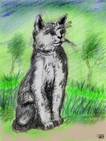 Katzenportrait von Norbert Hergl