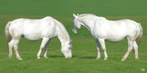 Auf dem Rücken der Pferde von Norbert Hergl