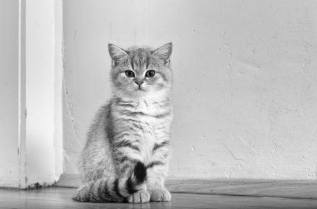 Dsc-3641-dot-bkh-kitten10sw-11-16