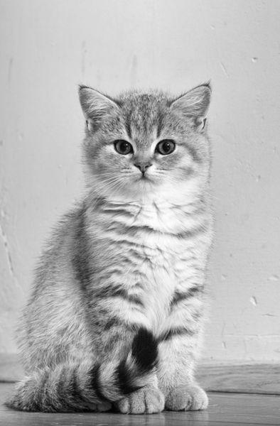 Dsc-3641-dot-bkh-kitten10sw2-11-16