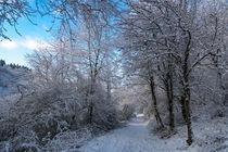 Wandern im Winterwald by Ronald Nickel