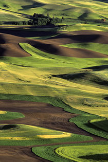 Rolling Hills in the Palouse by Jim Corwin