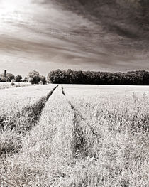 Tracks in the field von Michael Naegele