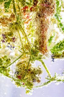 Plants in Water von maxal-tamor