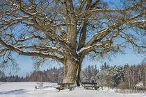 Tree 903017 von Mario Fichtner
