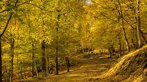Der goldene Wald an einem sonnigen Oktobertag von Ronald Nickel