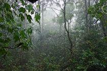 Überrascht vom Tropenregen von Hartmut Binder