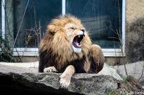 lion  by Karg.pictures- Luftaufnahmen.Bayern